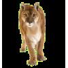 Кошки (тигр, леопард, барс)