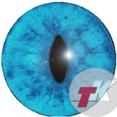 Лиса белая  глаза ТК-1