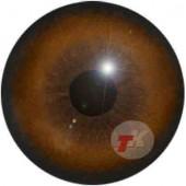 Медведь глаза ТК-1