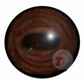 Лось глаза ТК-1