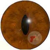 Лиса глаза ТК-2