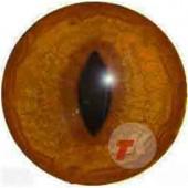 Лиса глаза ТК-1