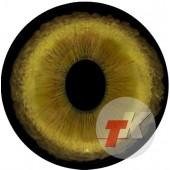 Сервал  глаза ТК-1