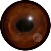 Кабан глаза ТК-1