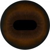 Зебра  глаза ТК-1