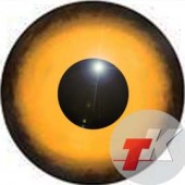 Орлан белохвост глаза ТК-1