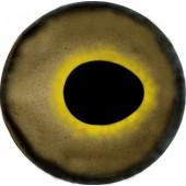 Окунь глаза ТК-1