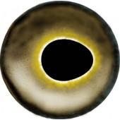 Окунь глаза ТК-3