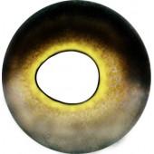 Судак глаза ТК-2