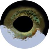 Щука глаза ТК-1